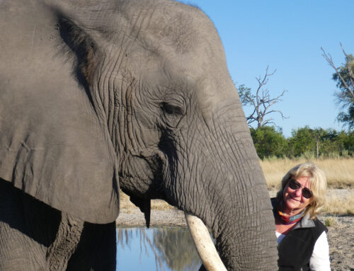 Elephant Love – Botswana, Africa