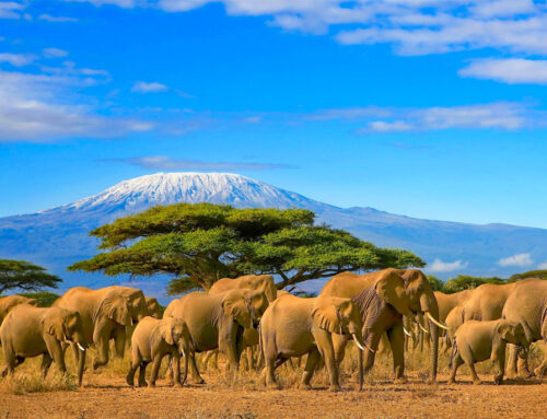 My Kenya Safari February 2021